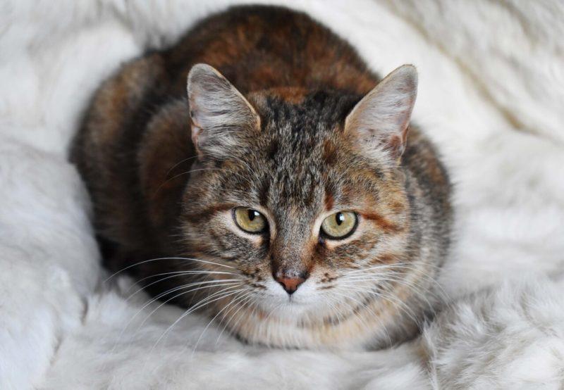 Добрая и заботливая бродячая кошка выкормила 13 брошенных котят