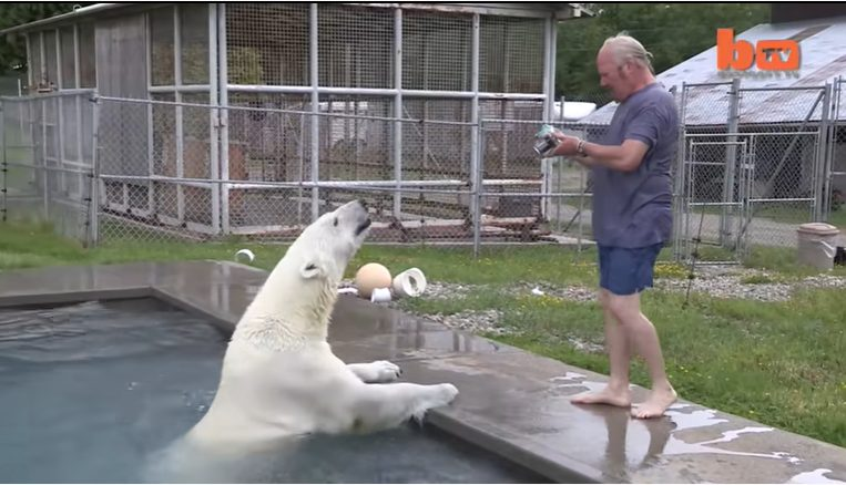 Мужчина уже более 20 лет дружит с белым медведем и даже плавает с ним в бассейне