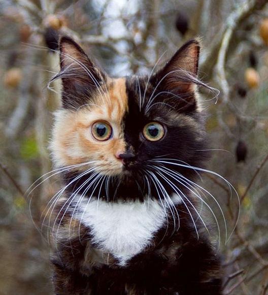 Необычная двуликая кошечка Яна стала новой звездой Интернета